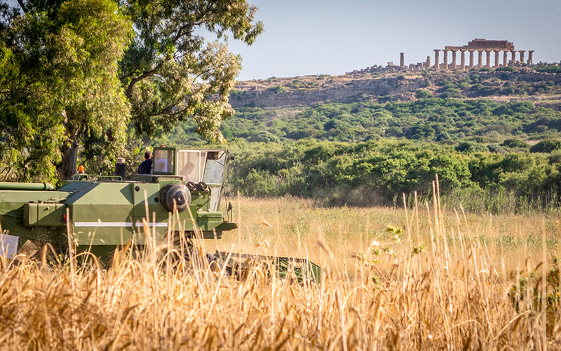 A threshing machine in front of the archeological site of Selinunte